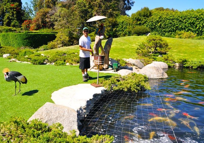 garden-pond-netting