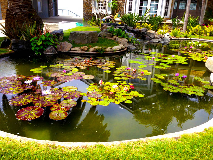 pond design and construction, pond construction, water lily pond, koi pond, koi fish pond, backyard pond, mr.fish, ponds company, pond design