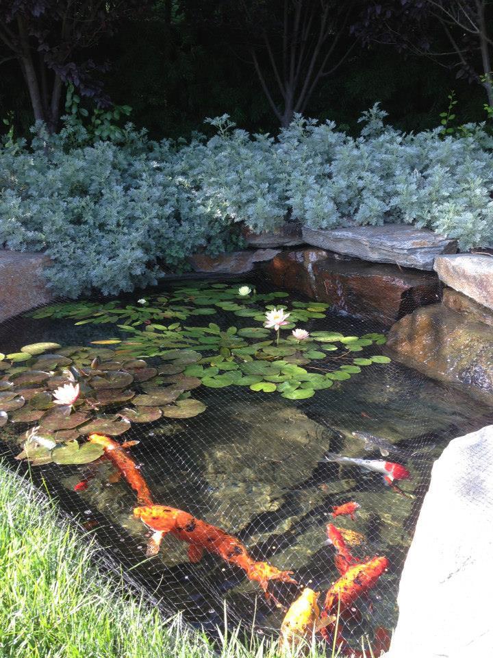 pond-net