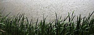 pond overflow, pond turnover, pond maintenance, pond emergency, pond water level
